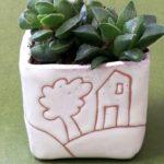 Vaso con pianta grassa